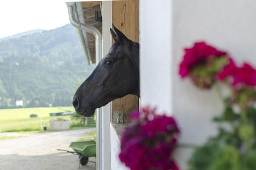 Horse, A Snapshot, The Head Of The, Farm, Stable, Barn