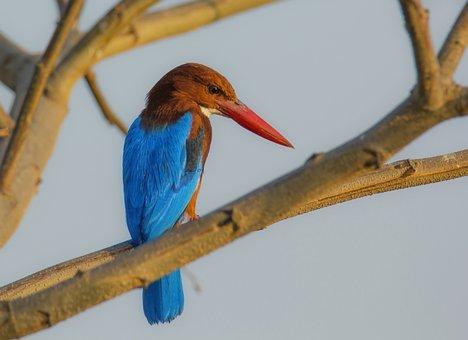 Bird, Mysore, India, Deejayclix, Tree, Perched