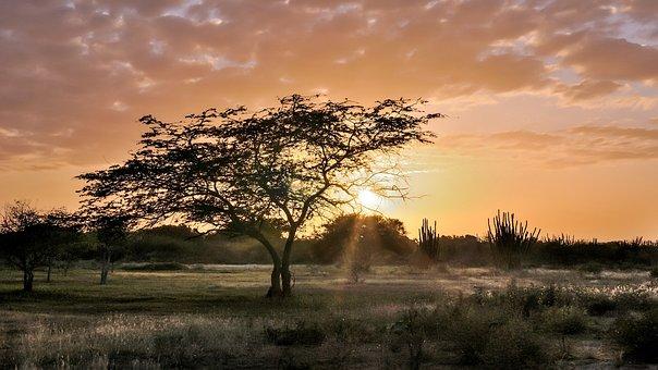 Tree, Sunset, The Sun's Rays, Twilight, Landscape