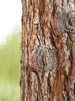 Tree, Bark, Brown, Tree Tann, Wood, Tribe
