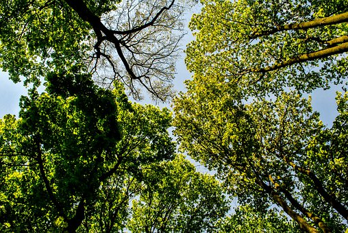 View, Tree, Forest, Forests, Sky