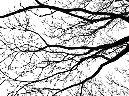 Tree, Branches, Silhouette, Black, White, Fractal