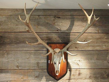 Antler, Trophy, Wood, Hirsch, Hunter House, Wild