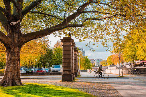 City, Park, Cycling, Autumn, Fall, Trees, Yellow Leaves