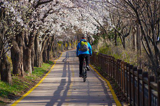 Cherry Blossoms, Cycling, Road, Bike Path, Springs