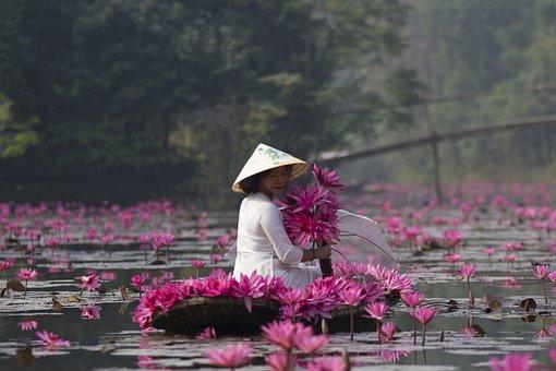 Lotuses, Flowers, Woman, White Dress, Hat, Umbrella
