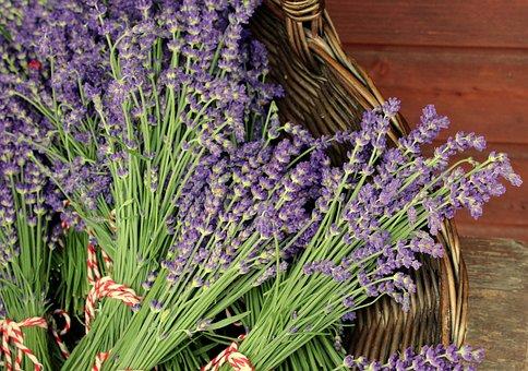 Lavender, Plant, Bouquet, Herbs, Violet, Summer