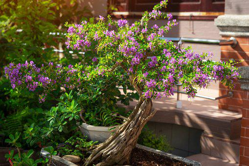 Bonsai, Tree, Garden, Pot Plant, Flora, Create