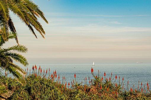 Cliff, Flowers, Sea, Ocean, Water, Nature, Scenery