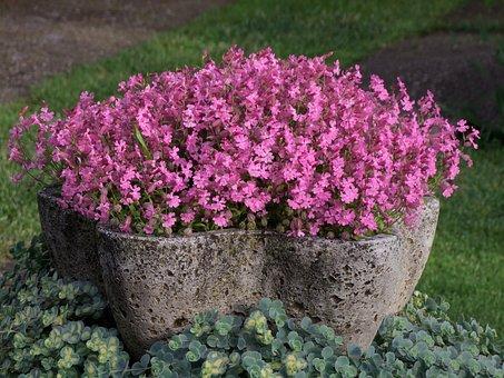 Flowers, Primrose, Primula, Herbs, Rock Flowers, Garden