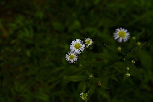 Flowers, Petals, Buds, Grass, Weeds, Forest Floor