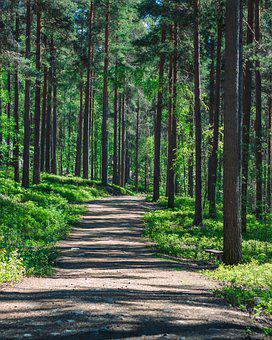 Forest, Trees, Path, Trail, Nature, Landscape