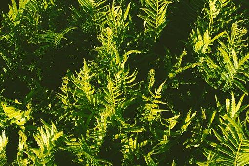 Plants, Bush, Leaves, Foliage, Bloom, Spring, Nature