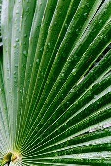 Palm Tree, Leaves, Foliage, Wood, Exotic, Green, Rain