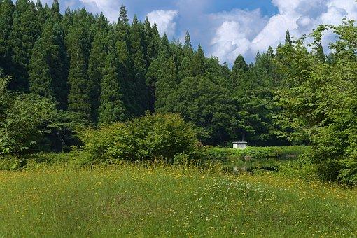 Meadow, Mountain, Trees, Nature, Landscape, Field, Sky