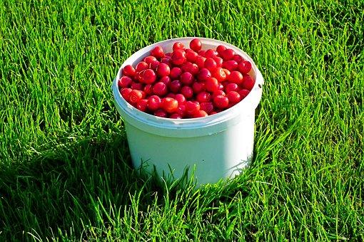 Cherries, Fruits, Food, Harvest, Fresh, Vitamins