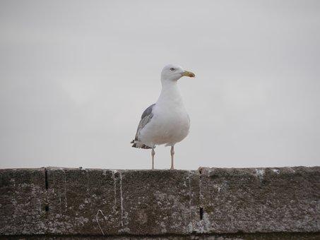 Seagull, Bird, Seabird, Animal, Plumage, Perched
