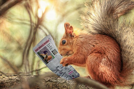 Squirrel, Rodent, Newspaper, Reading, Photomontage