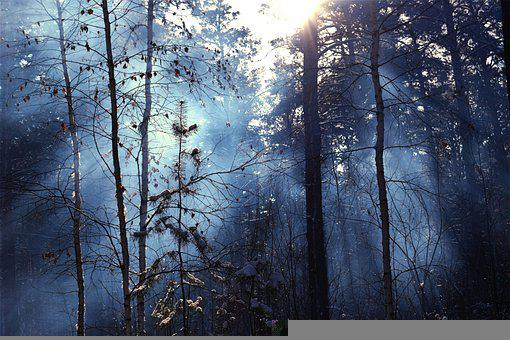 Fog, Trees, Frost, Cold, Winter, Snow, Story, Forest