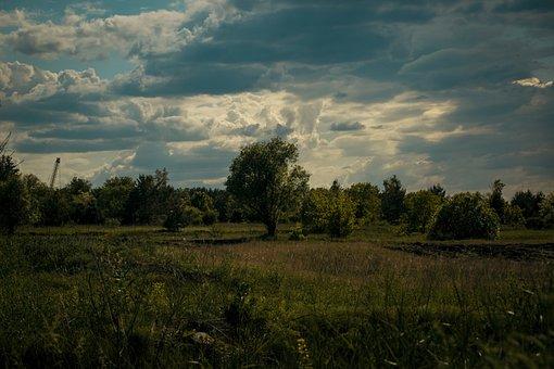 Field, Grass, Flowers, Trees, Sunset, Sky, Sun, Clouds