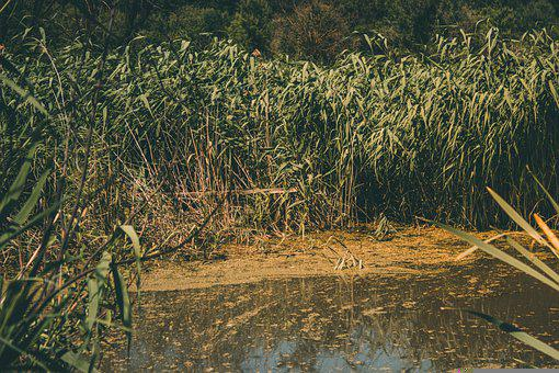 River, Trees, Bushes, Swamp, Water, Lake, Jungle
