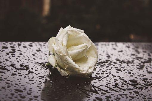 Rose, Flower, Rain, Memorial, Monument, New York, 911