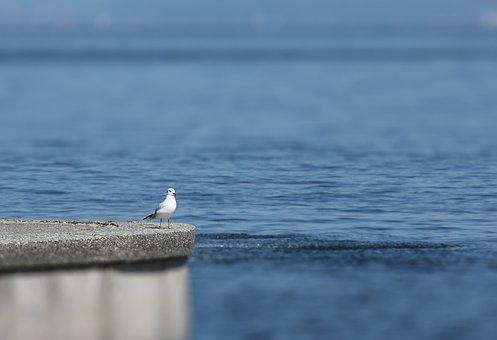 Seagull, Bird, Seabird, Animal, Sea, Perched, Feathers
