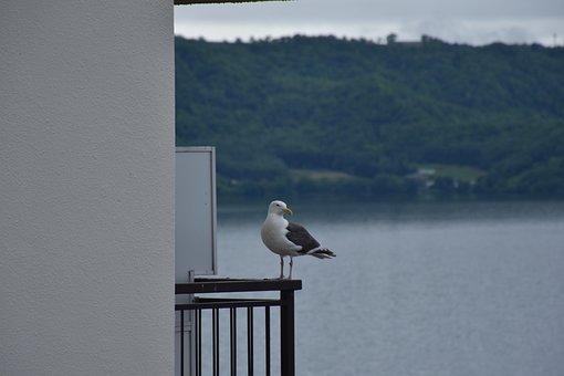 Seagull, Bird, Seabird, Animal, Plumage, Perched, Beak