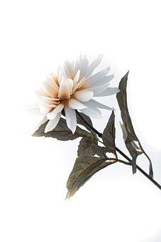 Flower, Leaves, Plant, White Flower, Petals, Bloom