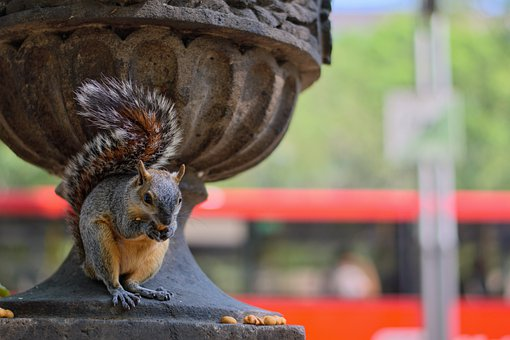 Squirrel, Rodent, Foraging, Eating, Nature, Animal