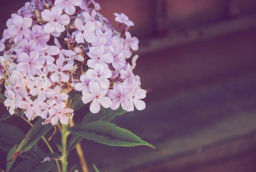 Flowers, Petals, Bouquet, Garden, Flora, Botany, Plant