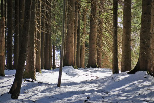 Forest, Snow, Tree, Then, Cold, Snowy, Branches, Nature