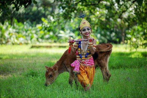 Little Krishna, Girl, Costume, Cow, Calf, Animal