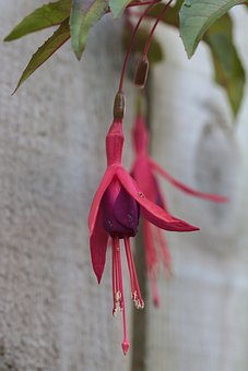 Flower, Plant, Petals, Buds, Flora, Botany, Nature