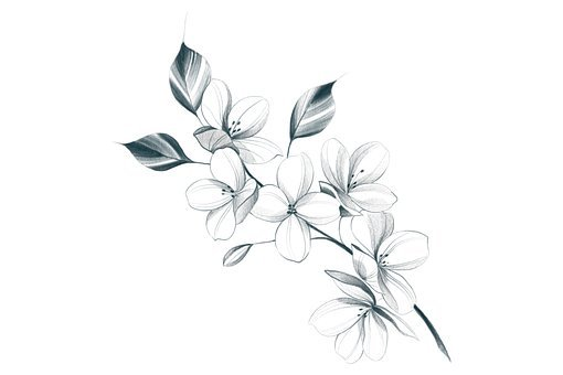 Flowers, Black And White, Background, Drawing, Leaves