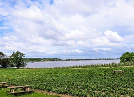 Field, Strawberry Field, Lake, Water, Sky, Clouds