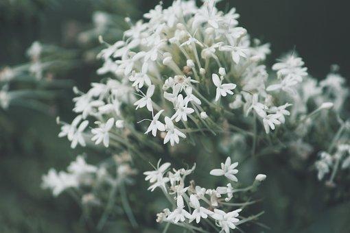 Flowers, Petals, Buds, Flora, Botany, Spring, Summer