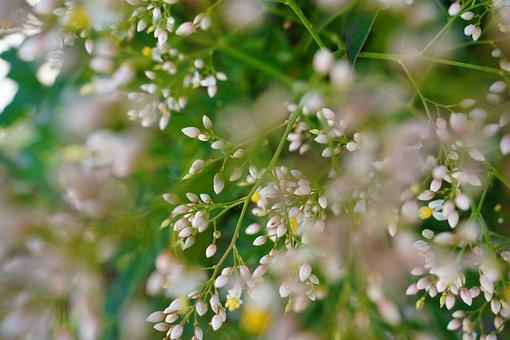 Flowers, Rowan, Berries, Bush, Plants, Leaves, Blossom