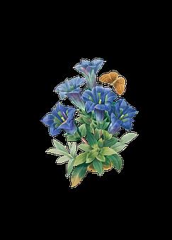 Flowers, Butterfly, Bouquet, Floral Arrangement, Spring