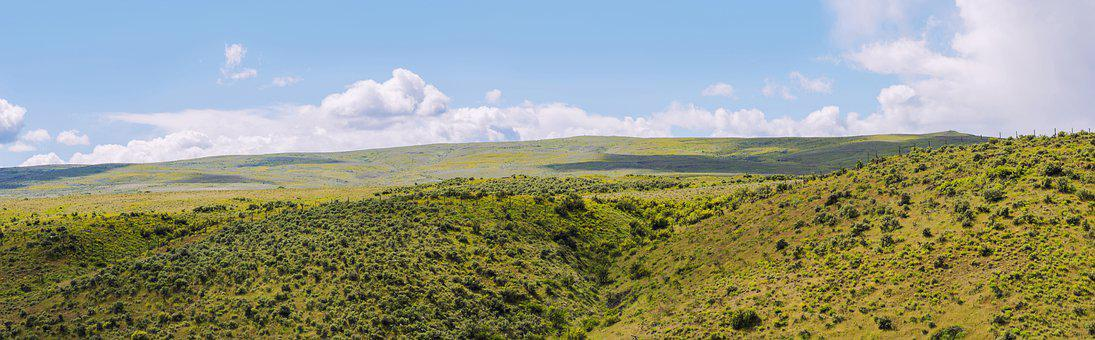 Yakima Valley, Sage Bush, Field, Nature, Summer, Sky