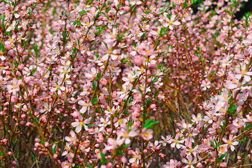 Flowers, Petals, Bush, Bloom, Watercolor, Season