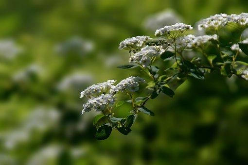 Flowers, Petals, Leaves, Bush, Nature