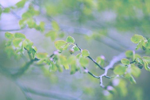 Blueberries, Flower, Forest, Bush, Spring, Nature