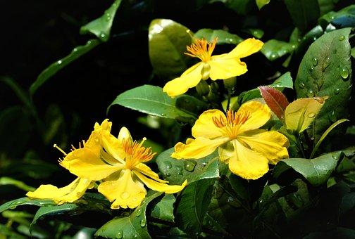 Flowers, Herbal Plant, Medicinal, Herbal