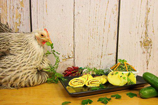 Chicken, Omelette, Eat, Food, Scrambled Eggs, Healthy