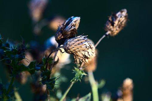 Flower, Plant, Summer, Spring, Floral, Nature, Garden
