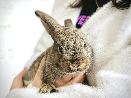 Rabbit, Bunny, Pet, Animal, Cute, Closeup