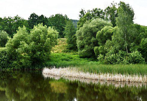 Lake, Reed, Trees, Water, Pond, Reflection, Park