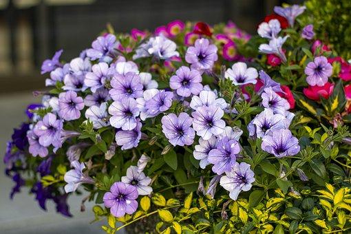 Flowers, Plants, Petals, Bush, Garden, Floral, Nature