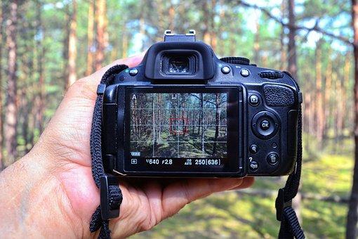 Display, Screen, Camera, Hand, Digital Camera, Trees